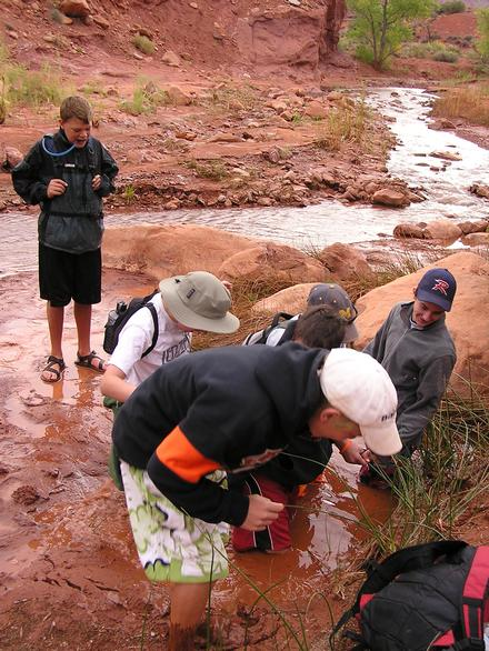 Discovering stream life at Professor Valley Field Camp
